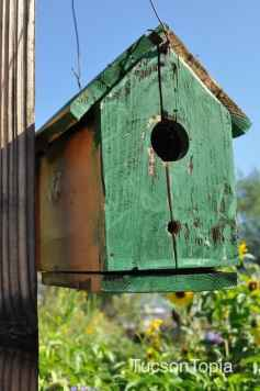 birdhouse at Community Food Bank of Southern Arizona