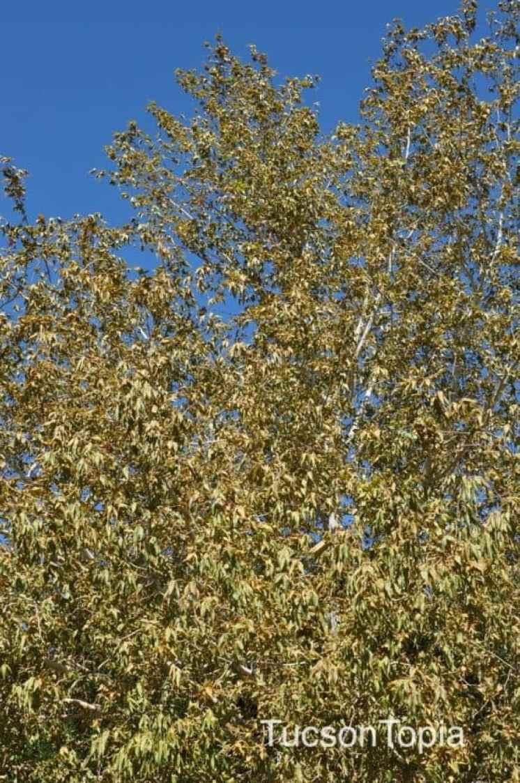 trees at Tohono Chul Park