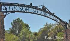 Tucson-Botanical-Gardens-at-2150-N-Alvernon-Way