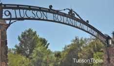Tucson-Botanical-Gardens-at-2150-N-Alvernon-Way