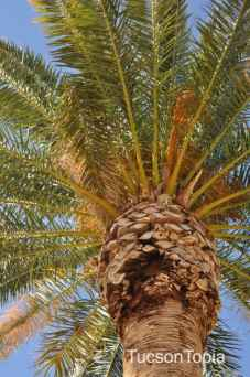 palm tree at La Madera Park
