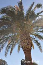 sunlight thru the palms at La Madera Park
