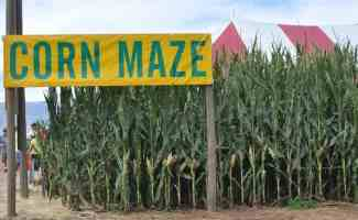 Corn Maze at Apple Annie's