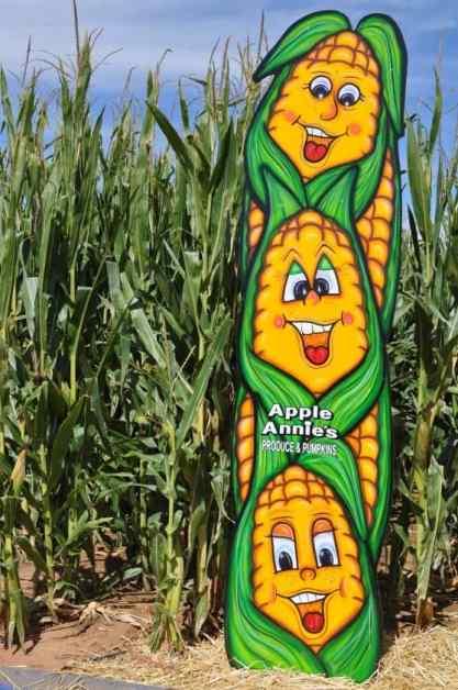 corn-y photo spot at Apple Annie's