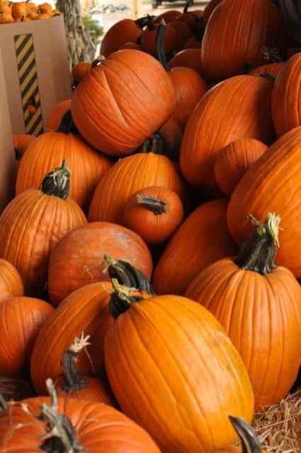 pile of pumpkins at Apple Annie's