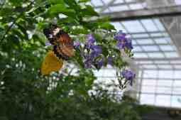butterflies at Butterfly Wonderland