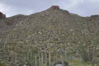 scenic Pima Canyon