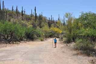 girl hiking in Sabino Canyon