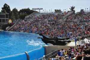 shows at SeaWorld San Diego