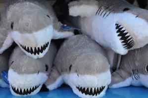 stuffed sharks at SeaWorld San Diego