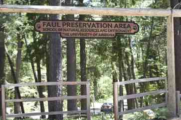 Faul Preservation Area Mount Lemmon