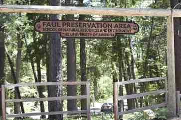 Faul Preservation Area Mount Lemmon