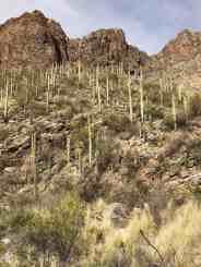 Tucson Hike Ventana Canyon Trail