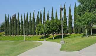 trees-green-Bill-Barber-Memorial-Park
