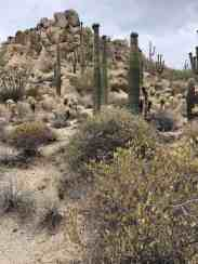 overcast saguaro cactus hiking four seasons scottsdale
