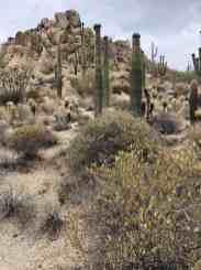 overcast saguaro cactus hiking four seasons scottsdale