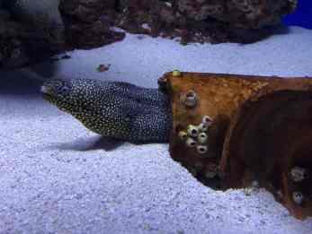 eel arizona sonora desert museum