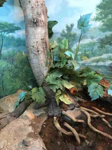 habitat arizona sonora desert museum