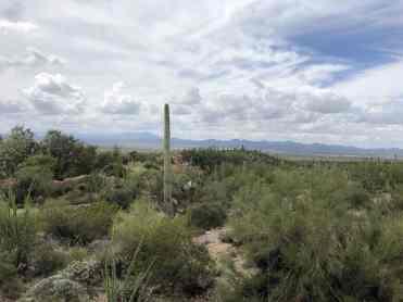 overcast arizona sonora desert museum