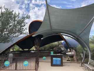 stingray touch arizona sonora desert museum