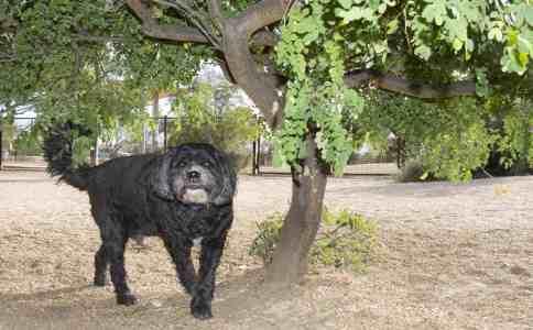 black dog Purple Heart Park