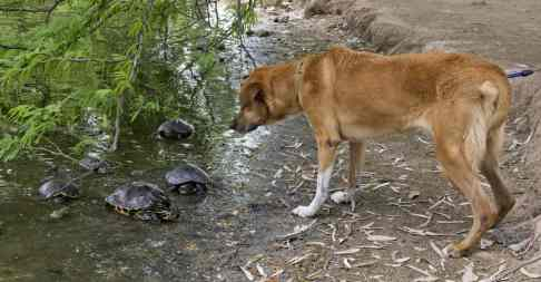 dog meeting turtles Fort Lowell Park