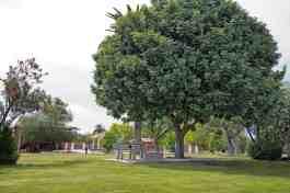 mature tree Catalina Park Tucson