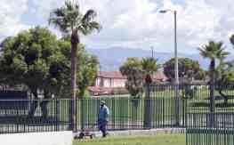 lawn grass Himmel Park Tucson
