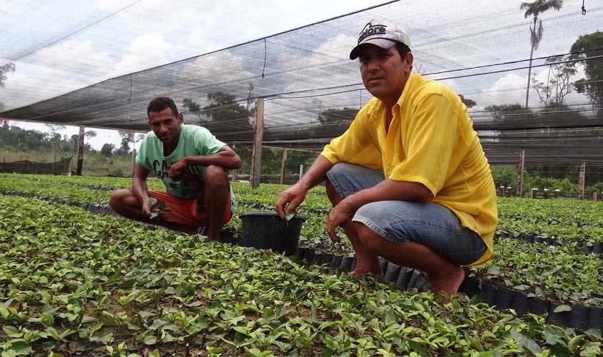 Prefeitura distribuirá 600 mil mudas de café clonal em dezembro
