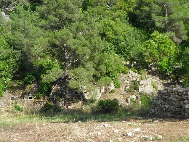 Von Bäumen & Sträuchern überwachsene Ruinen