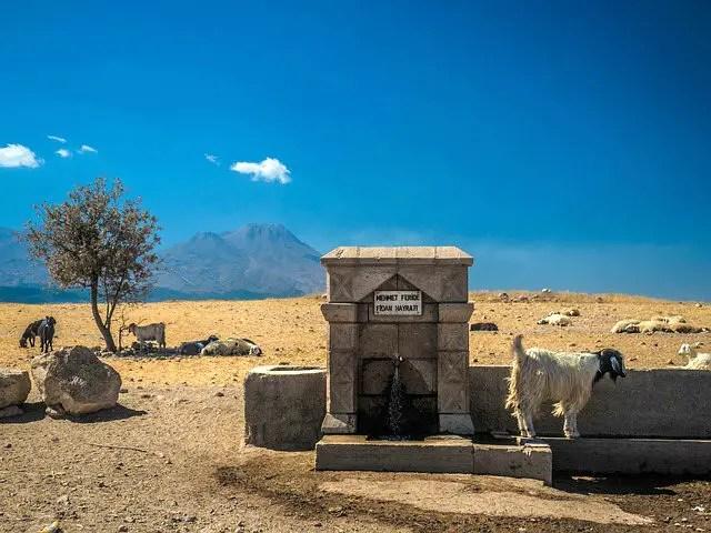 Ziegen sind neben einer Straße zu sehen. Neben ihnen steht ein Brunnen vor einer kärglich bewachsenen Vegetation. Im Hintergrund ist ein hoher Berg zu sehen.