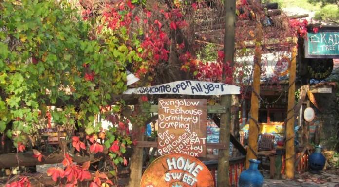 Die Blumen, Sträucher und bunt bemalten Holzbretter am Eingang von Kadir´s Tree House.