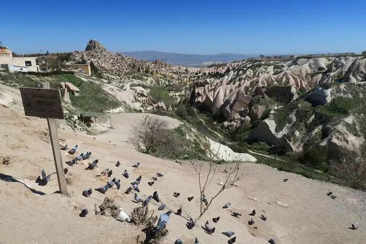 Dutzende Tauben sitzen am Rand des Pigeon Valley in Kappadokien. Im Hintergrund ist die Festung in Uchisar zu sehen.