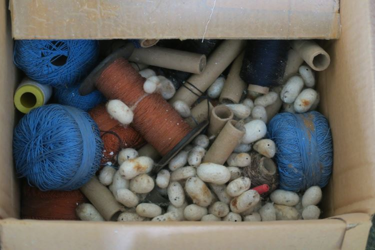 Eine Schachtel in der Seidenkokons liegen. Daneben sind andere Gegenstände zum Weben.