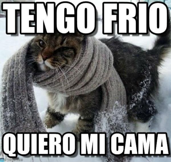 gato frío