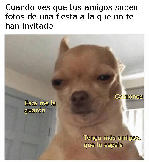 Chihuahua meme cumpleaños 02