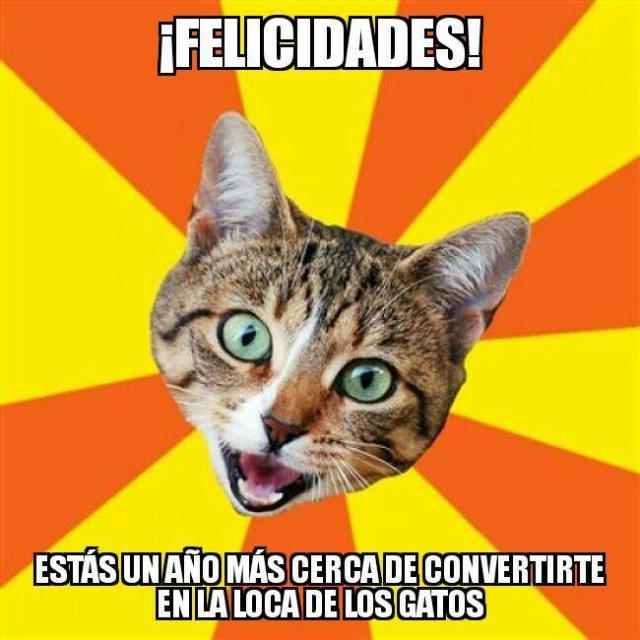 loca de los gatos meme cumpleaños felicidades
