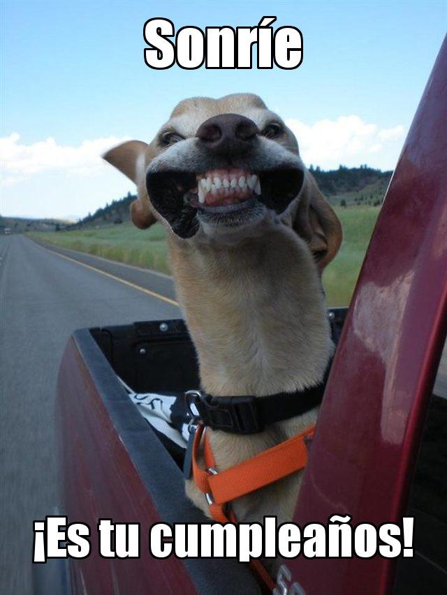 Sonrie es tu cumple meme Dog smile its birthday
