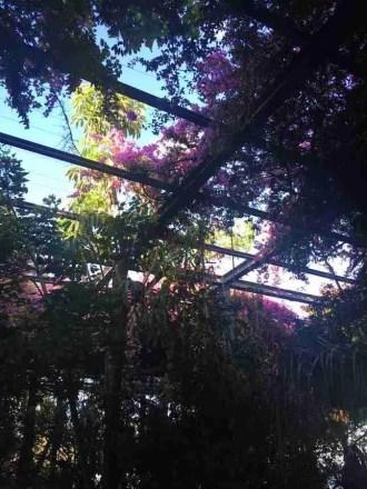 Parque en Lisboa--no es muy relevante pero es bonito y el morado es un color de paz y unidad ©CassidyOlsen