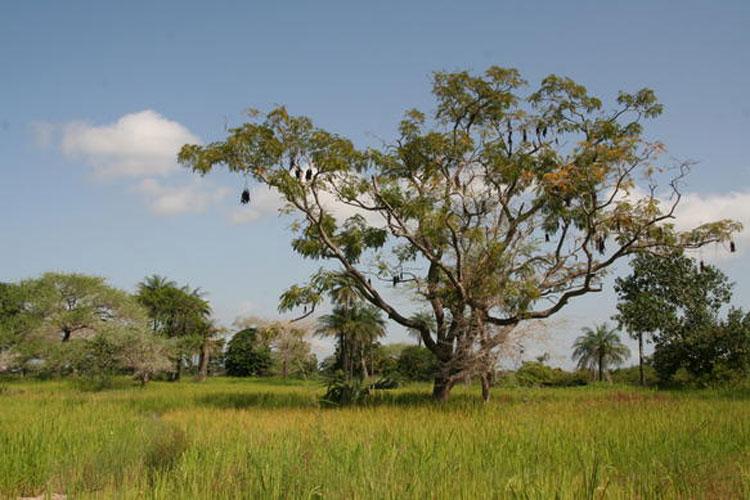 Los parques nacionales de Senegal | Revista Tu Gran Viaje. Reportajes, noticias de turismo, ofertas de viajes baratos