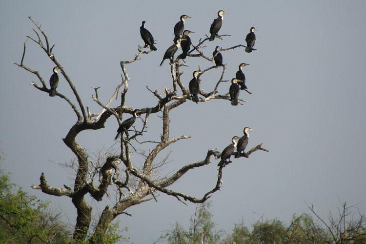 Djoud. Los Parques Nacionales de Senegal en la revista Tu Gran Viaje