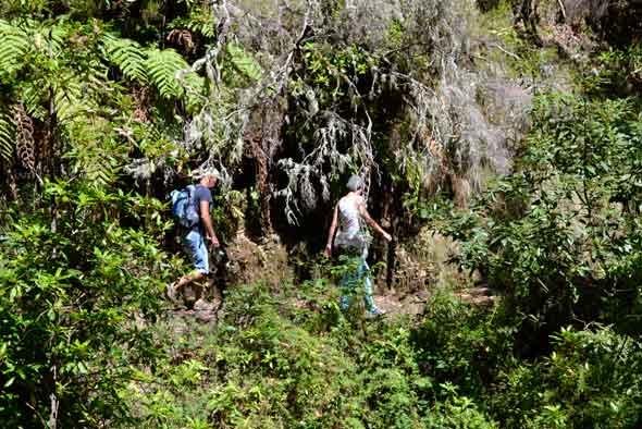 Senderismo en Madeira. Foto (c) Javier Olivares