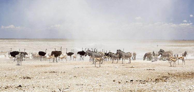 El parque nacional de Etosha es uno de los más ricos en biodiversidad de todo África
