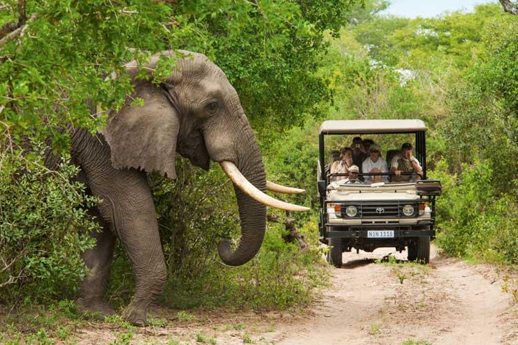 Visitar el Parque Nacional Kruger de Sudáfrica | Tu Gran Viaje