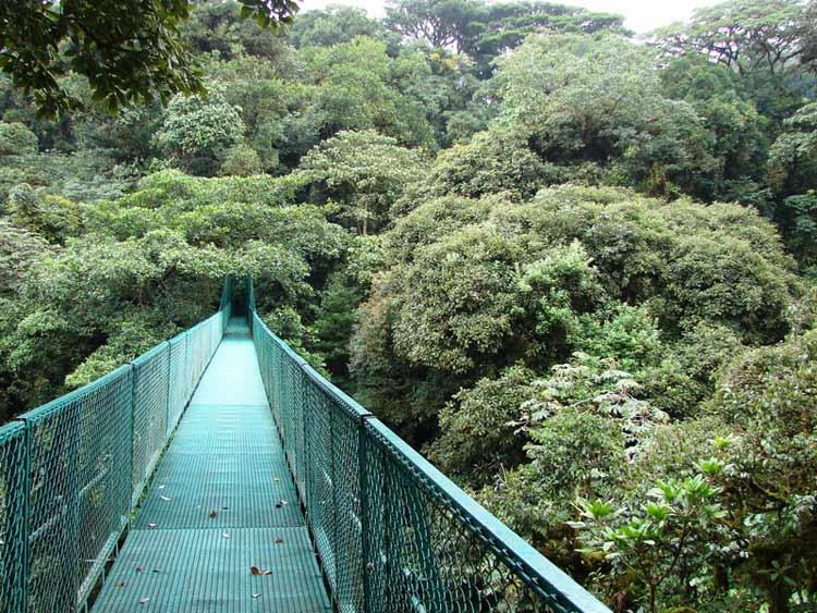 Puente colgante de Monteverde, Costa Rica