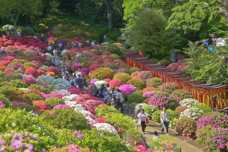 Gran Festival del Santuario Nezu-Jinja. Tu Gran Viaje