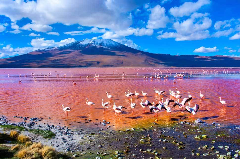 Tu Gran Viaje a la laguna colorada de Bolivia