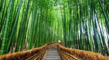 Viajes de novios a Japón para parejas - Xperts de Tu Gran Viaje