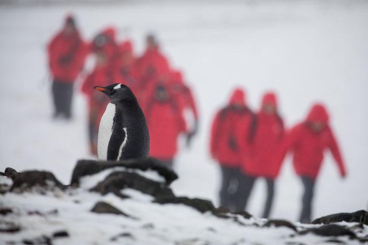 La expedicion a la Antartida del Silver Cloud   Revista Tu Gran Viaje