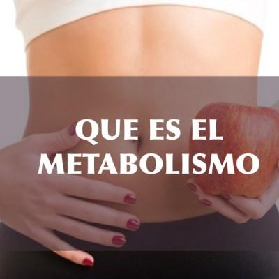 Que es el metabolismo